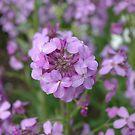 Purple flower by laurav