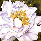 White Peonie by Anne Sainz