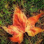 Autumn Leaf by Angelica Aguilar