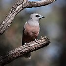 White-browed Woodswallow by Kerryn Ryan, Mosaic Avenues
