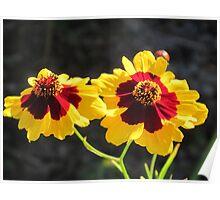 Golden Wild Flowers Poster