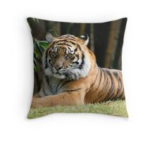 Bengal Tiger relaxing in the sun. Throw Pillow