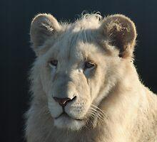 White Lion Cub by LiAmP