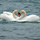 Swans Hearts by David Freeman
