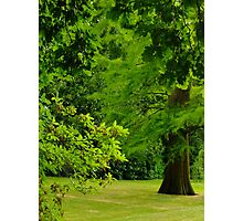 Garden on The Hill Photographic Print