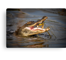 Alligator snagging a Crab for Breakfast Canvas Print