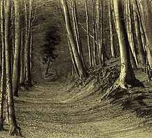 The Forest (toned) by Hans Kawitzki