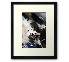 Harlee  Framed Print