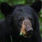 Black Bear by panthrcat