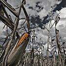 Corn by Laurent Hunziker