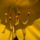 Closeup, yellow lily by Harv Churchill