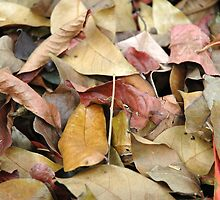 dry leaf by bayu harsa