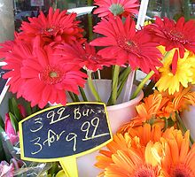 Daisies For Sale--Chicago Street Market by Erica Lipper