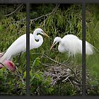 Egret Family by WiredMarys