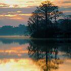 Bald Cypress Peninsula by michaelBstone