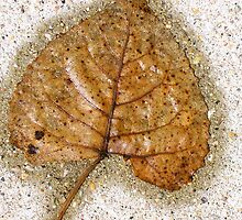 Rain Pressed Leaf--Chicago by Erica Lipper