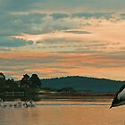 Pelicans at Mallacoota by Mark Whittle