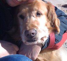 Flynnie The Wonderdog by Robbo1