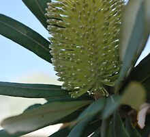 Australian Banksia by Lozzar Flowers & Art