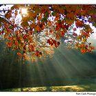 Sun Rays by Pam Clark