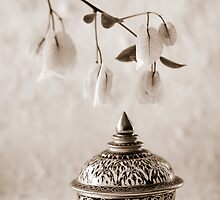 Thai Still Life by AnnieD