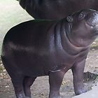 Smile - pygmy hippo baby with infectious grin by Sandra O'Connor