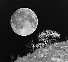 Moonlit Dream by Barrie Daniels