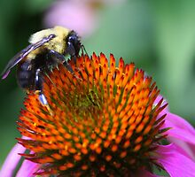 Bee-ing Happy by Laurel Talabere