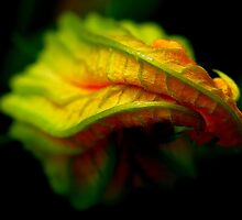 Courgette flower by loinfr