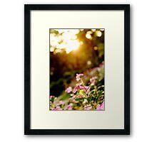 Sunbathing - Botanical Gardens, Ho Chi Minh City, Vietnam Framed Print