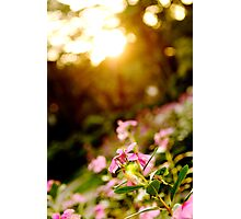 Sunbathing - Botanical Gardens, Ho Chi Minh City, Vietnam Photographic Print