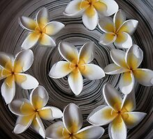 Circle of Frangipanis by thepixtakers