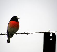 Bird on a Wire by James Edwards