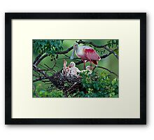 Mother Roseate and her chicks Framed Print