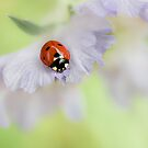 Ladybug by Mandy Disher