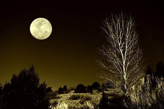 A Nature Goodnight by myrbpix