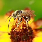 Bee Sunglasses by Brenda Burnett