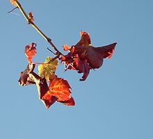 Autumn Hangs On by Leyla Hur
