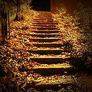 Golden Stairway by Tanya Rossi