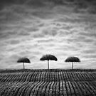 Three sisters by KLIMAS