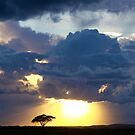 Savanna Storm by Graeme Shannon