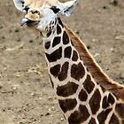 Little Giraffe by DutchLumix