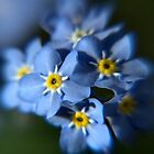 Forget-Me-Not by Paul  Eden