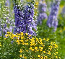 Delphinium Duo by Marilyn Cornwell