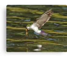 Up the Food Chain You Go Canvas Print