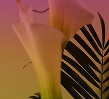 Calla Lilly by Kathleen Struckle