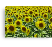 Field Full of Sunshine Canvas Print