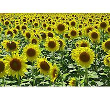 Field Full of Sunshine Photographic Print