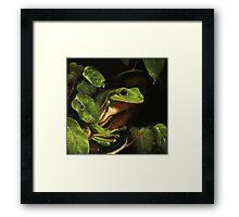 Green tree frog (Litoria caerulea) Framed Print