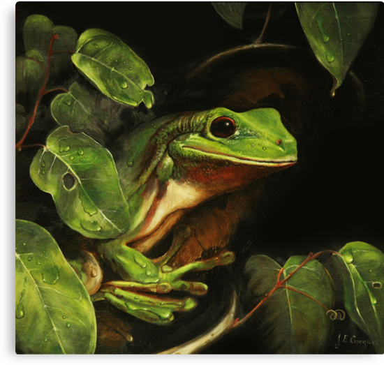 Green tree frog (Litoria caerulea) by TallabeenaArt
